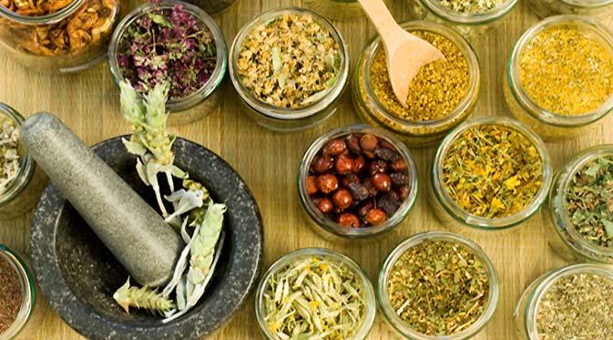 obat tradisional jamur pom pom
